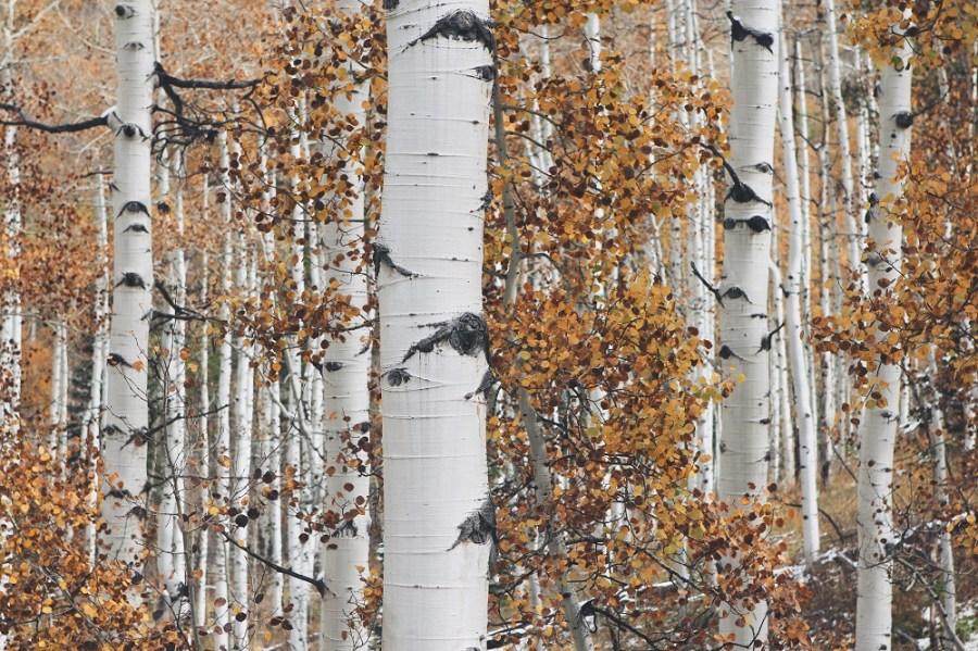 Photo credit - John Price via unsplash.com