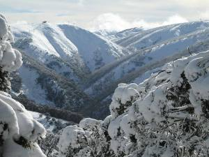 Photo credit - mthotham.com.au