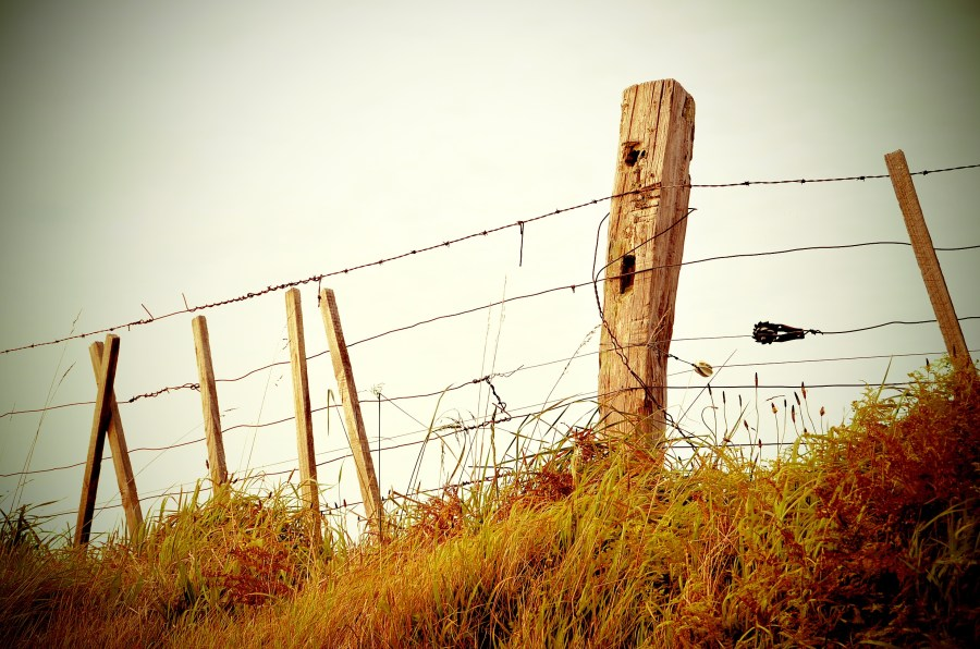 Country scene with barbed wire fence
