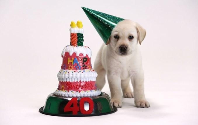 Kill-Joy Cannot Resist these Birthday Puns