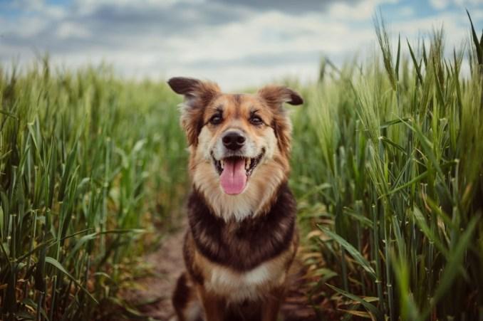 Telegu Dog - Well Story