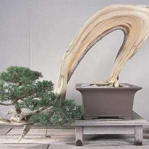 National Bonsai Museum in Washington