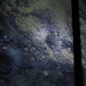 Unexpected Life half a Mile under Antarctic Ice Shelf