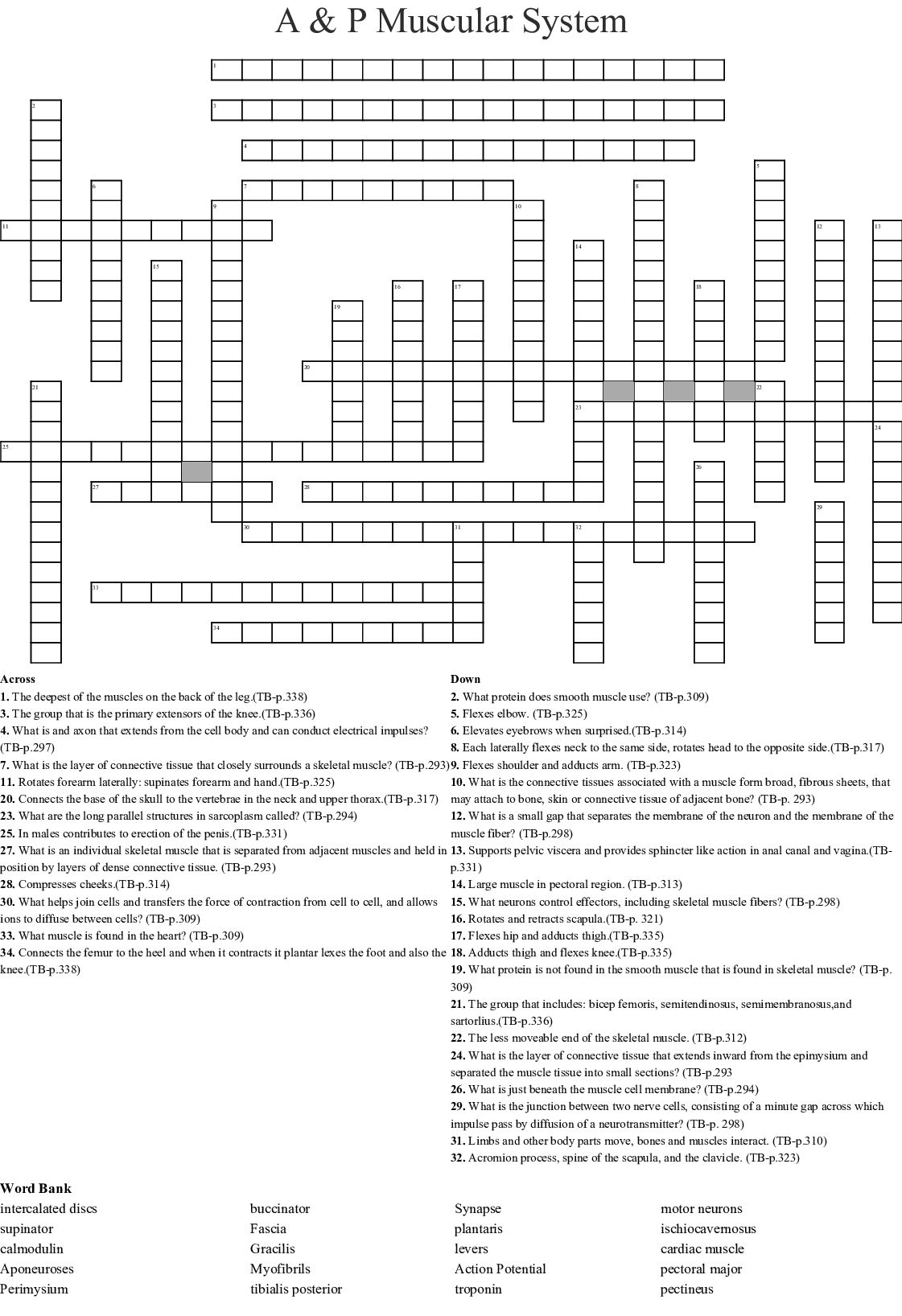 A Amp P Muscular System Crossword
