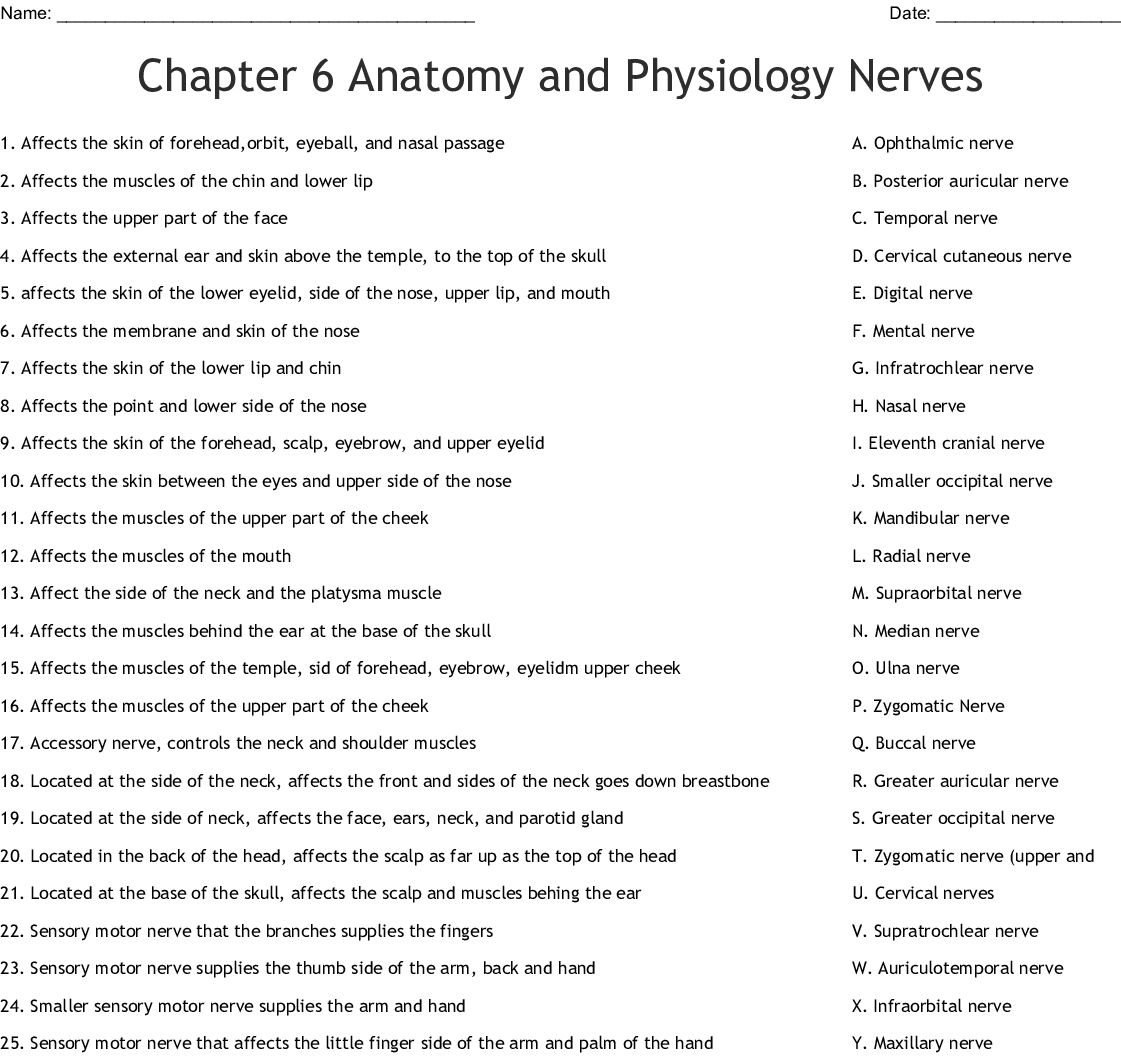 Chapter 6 Anatomy And Physiology Nerves Worksheet