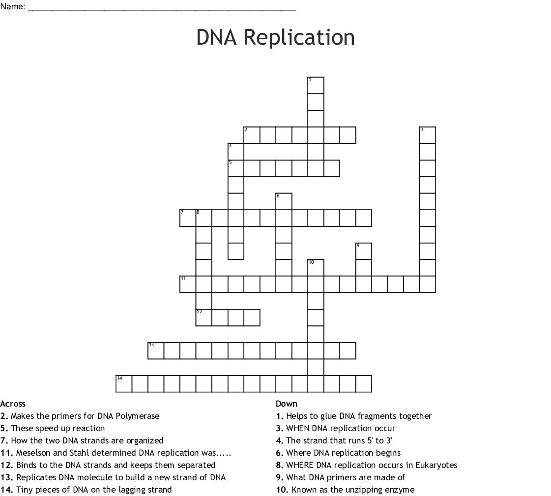 Dna Replication Crossword