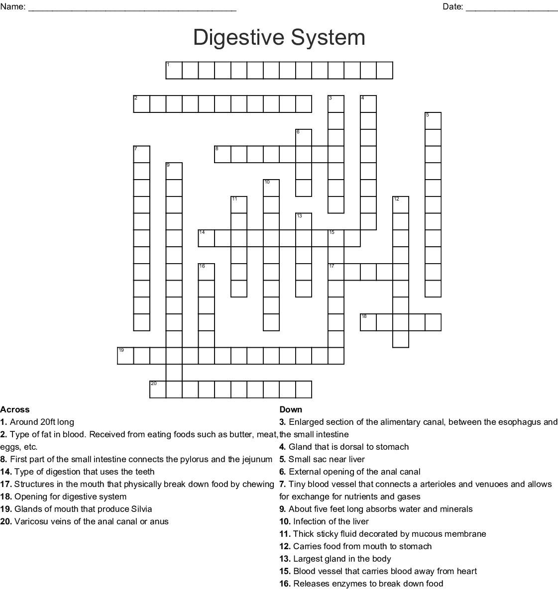 Proteins That Aid Digestion Crossword Clue