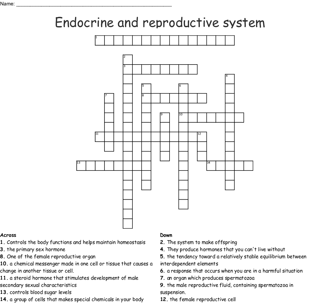 Endocrine And Reproductive System Crossword