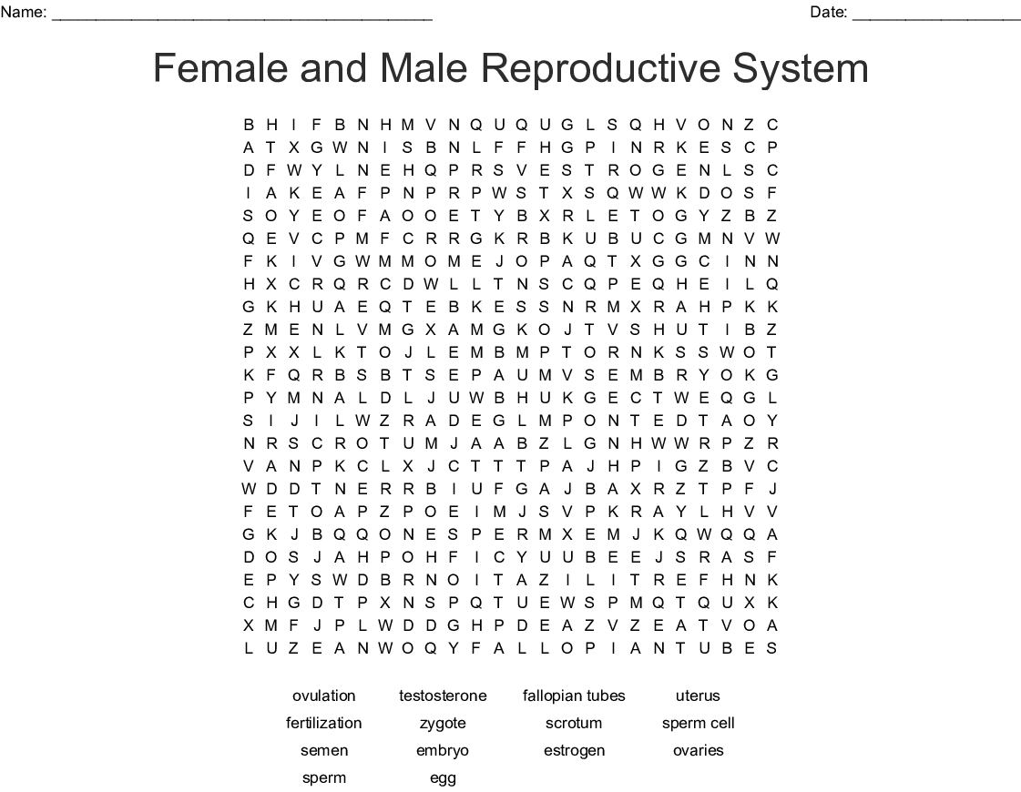 Female And Male Reproductive System Word Search