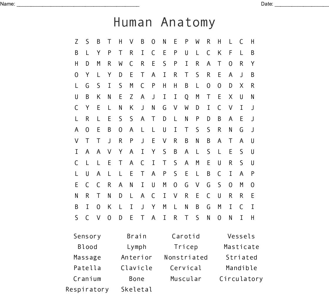 Human Anatomy Word Search