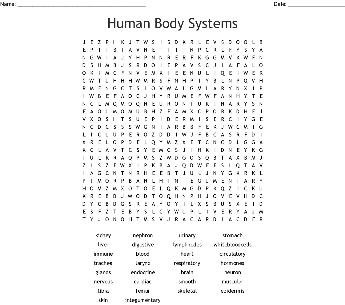 Immune System Worksheet Answer Key