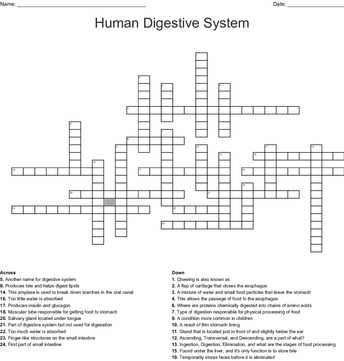 Human Digestive System Crossword