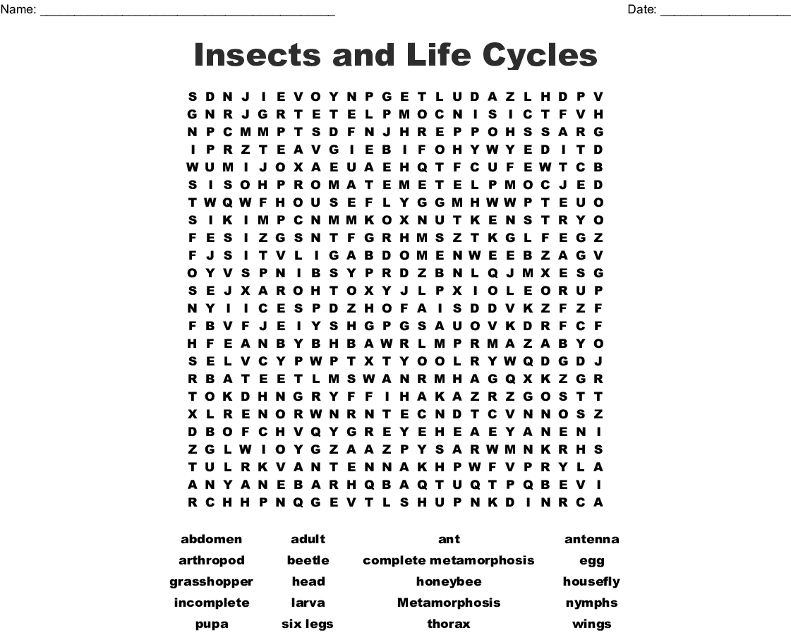 Butterfly Terms Puzzle Crossword