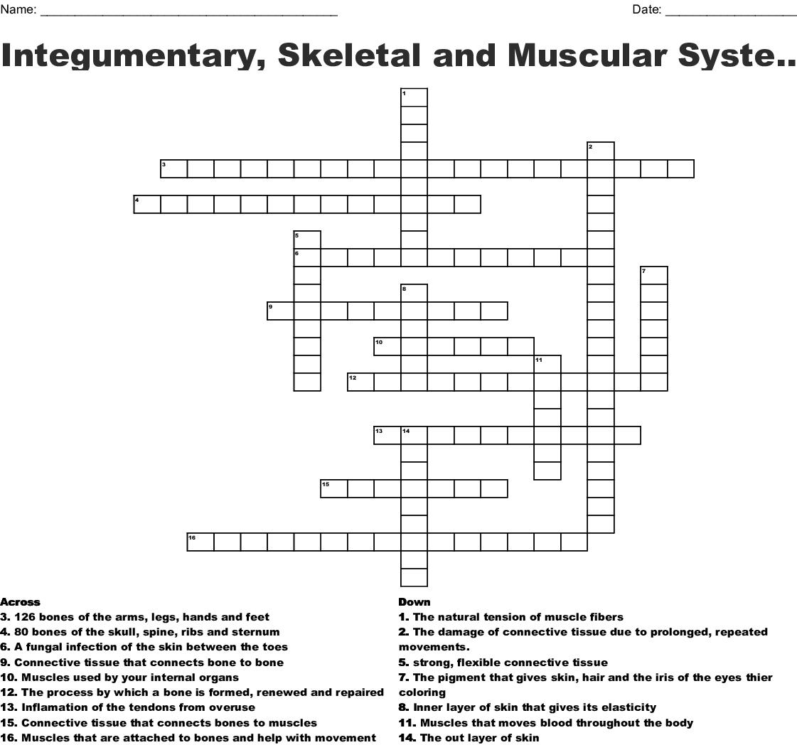 Integumentary Skeletal And Muscular System Crossword