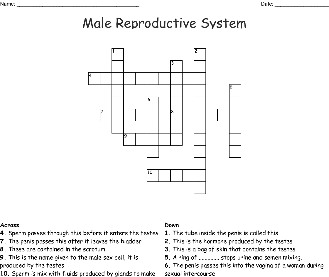 The Male Reproductive System Worksheet Answers