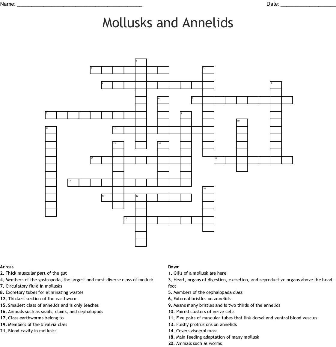 Mollusks Worksheet Answers