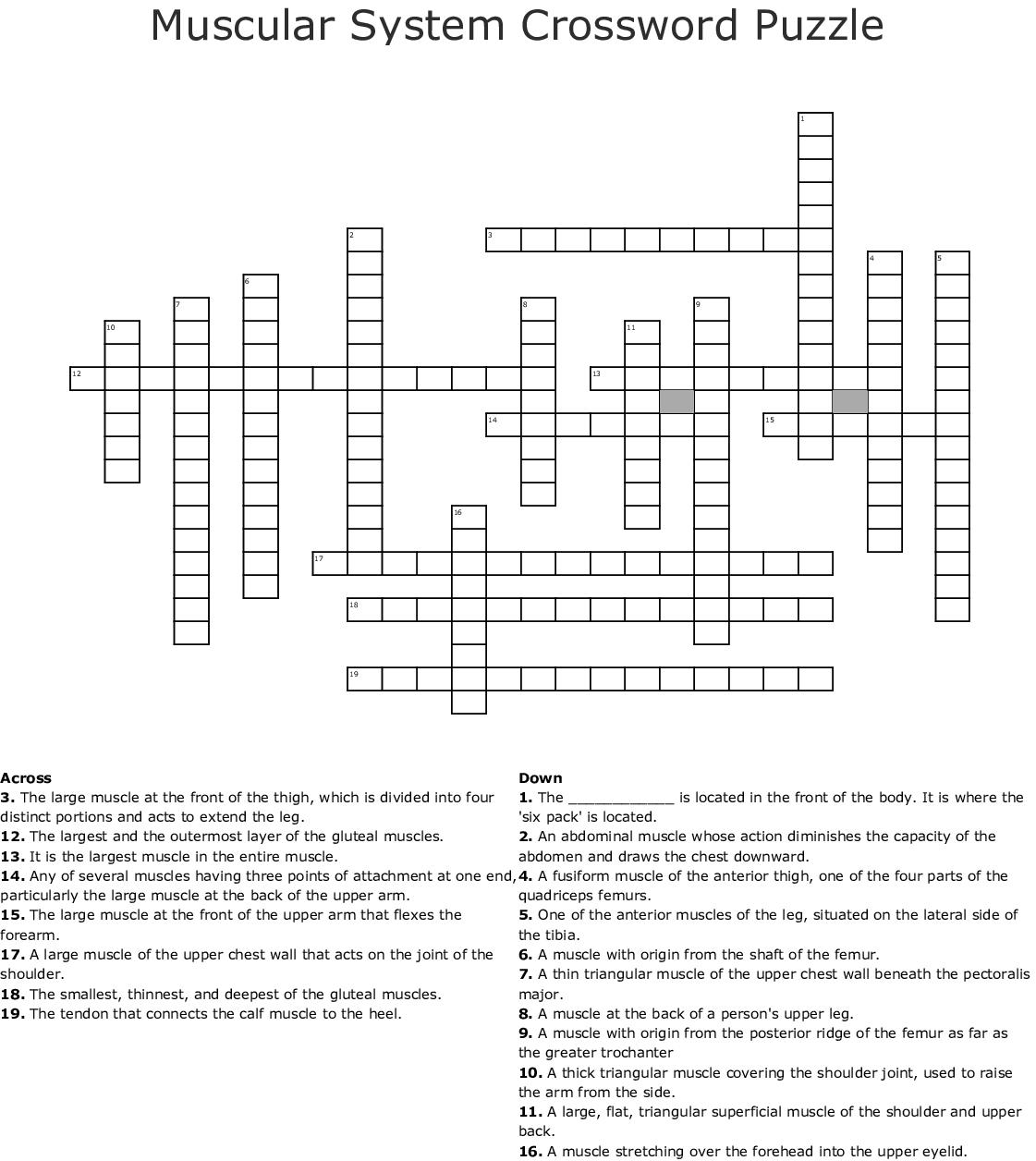 Muscle Crossword