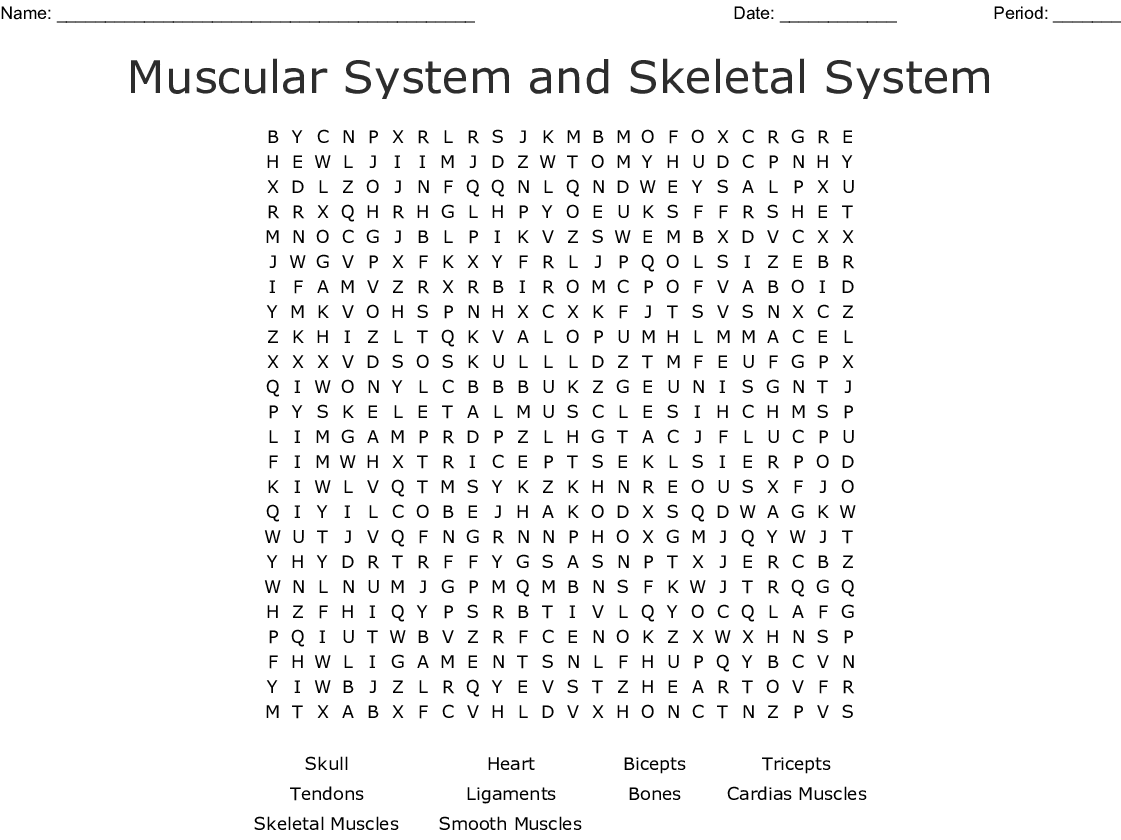 Muscular System And Skeletal System Word Search