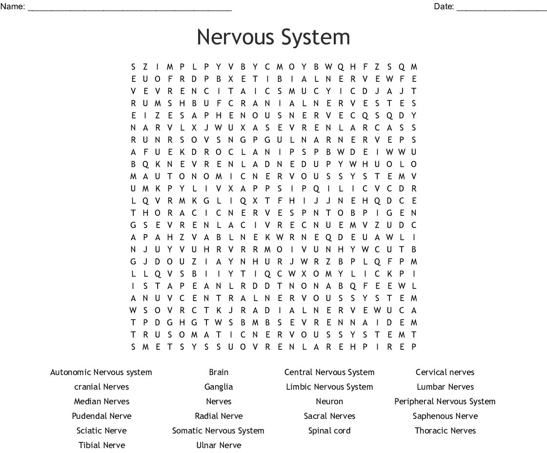 Nervous System Crossword Puzzle Answers Key