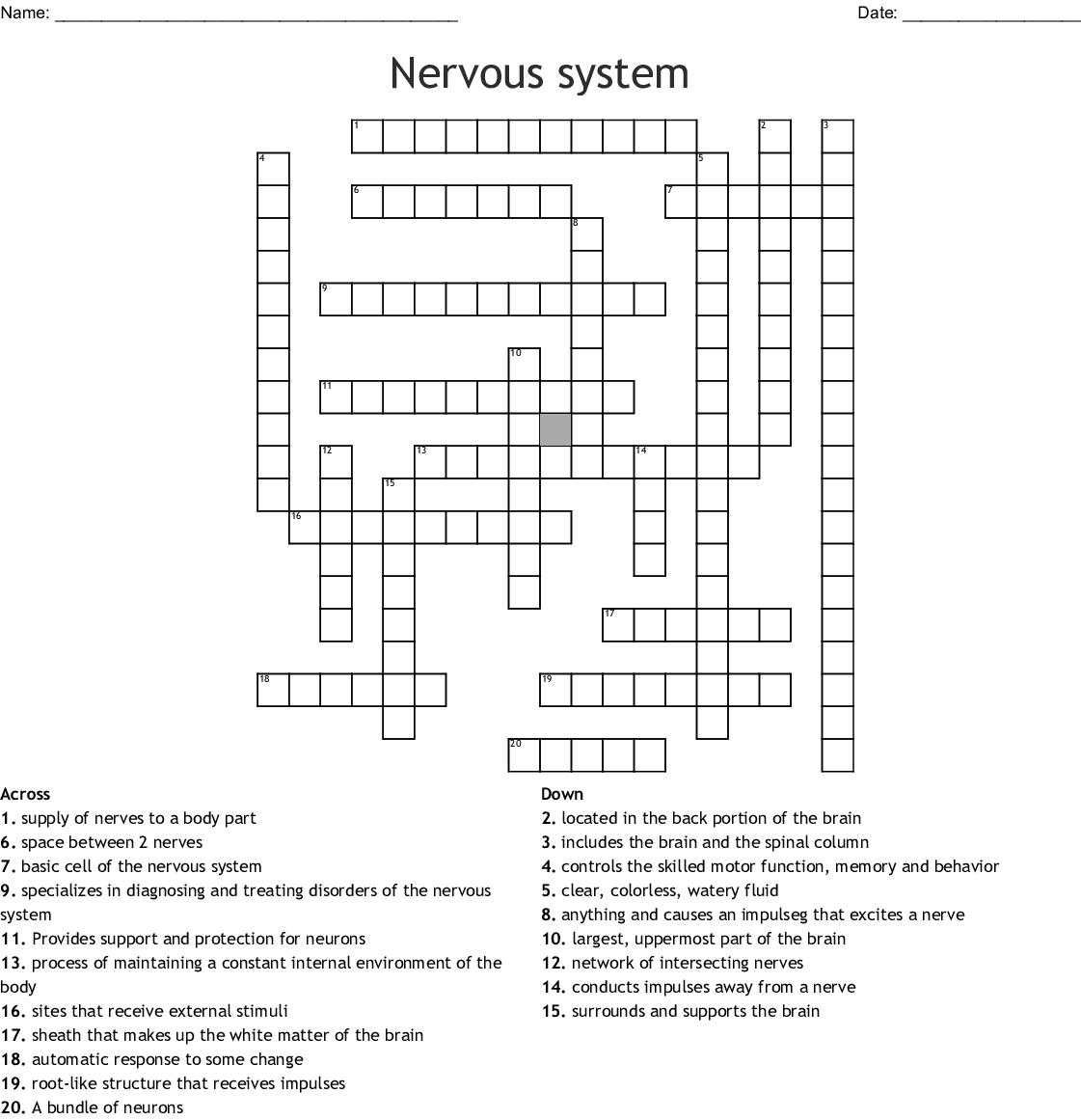 Nervous System Word Search