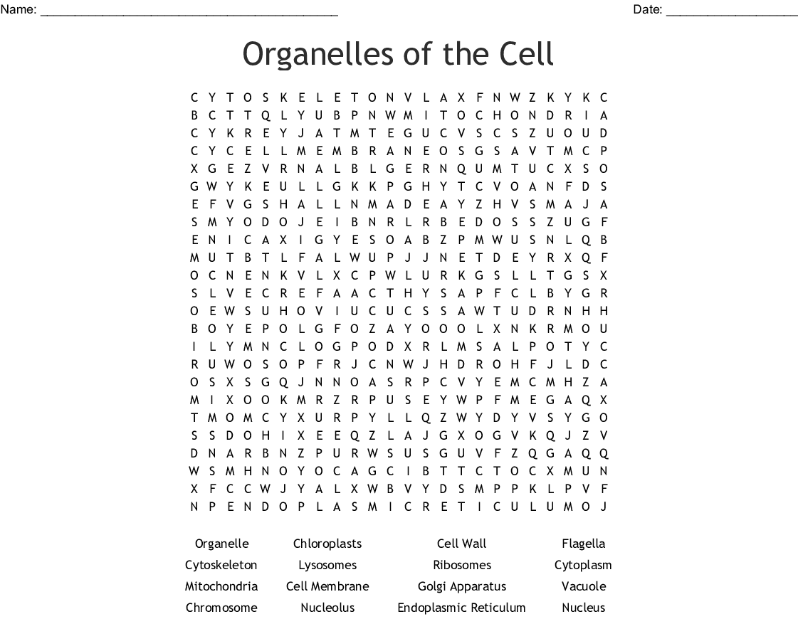 Cell Structure And Function Word Search