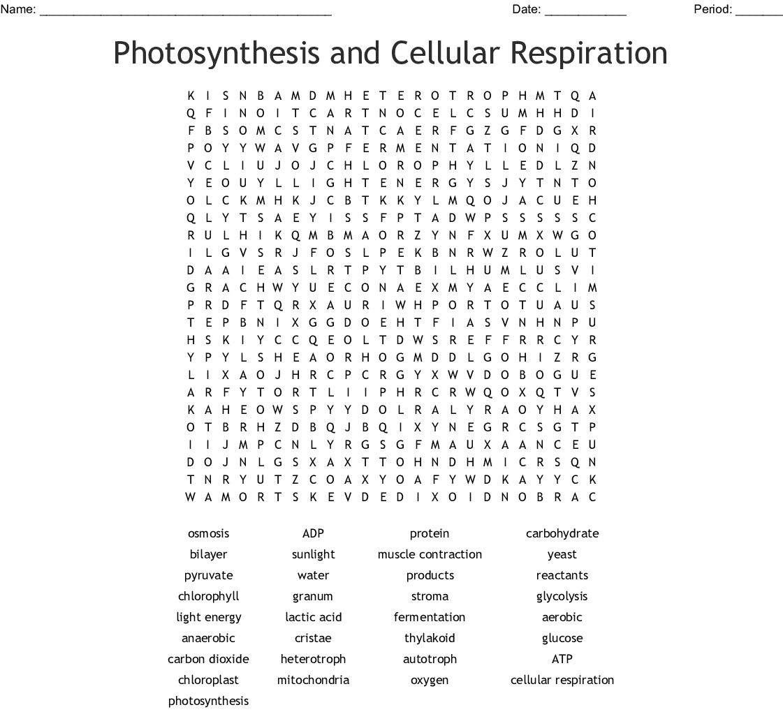 Photosynthesis And Respiration Word Search
