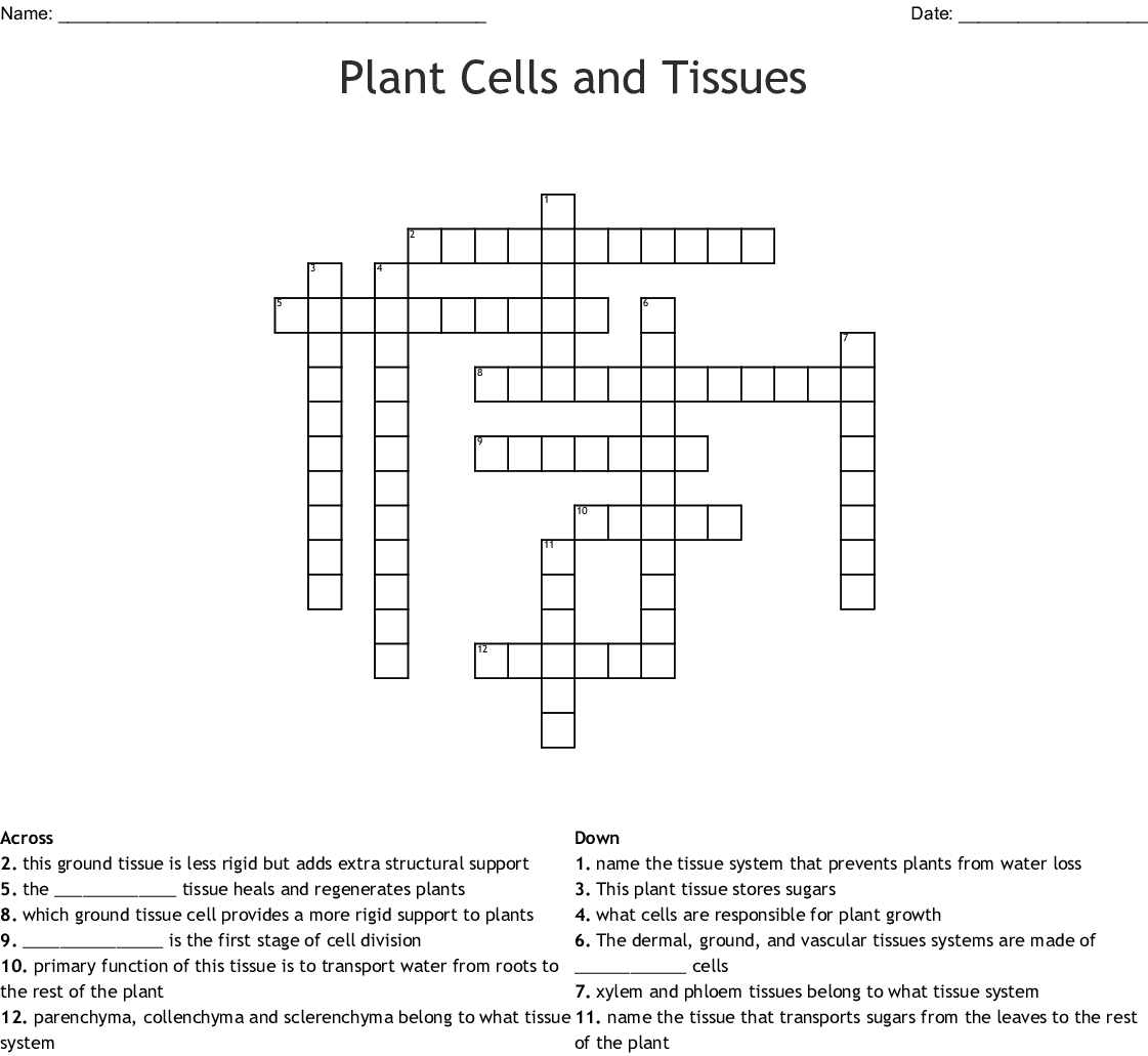 Leaf Structure And Function Crossword