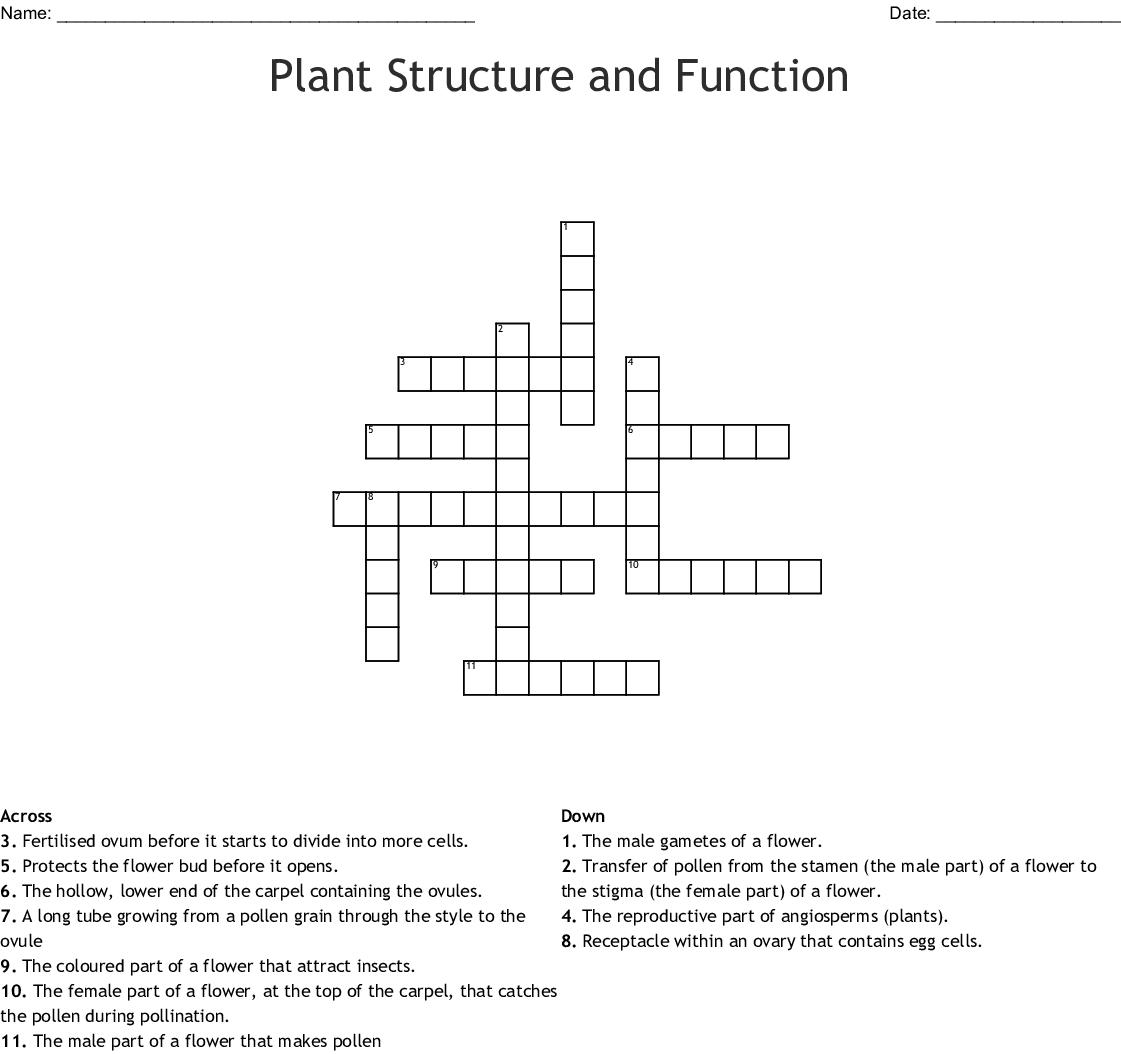 Parts Of The Flower Word Search