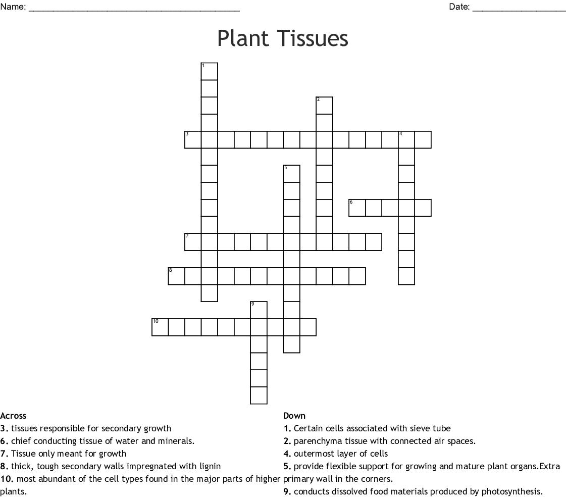 Plant Tissue Crossword