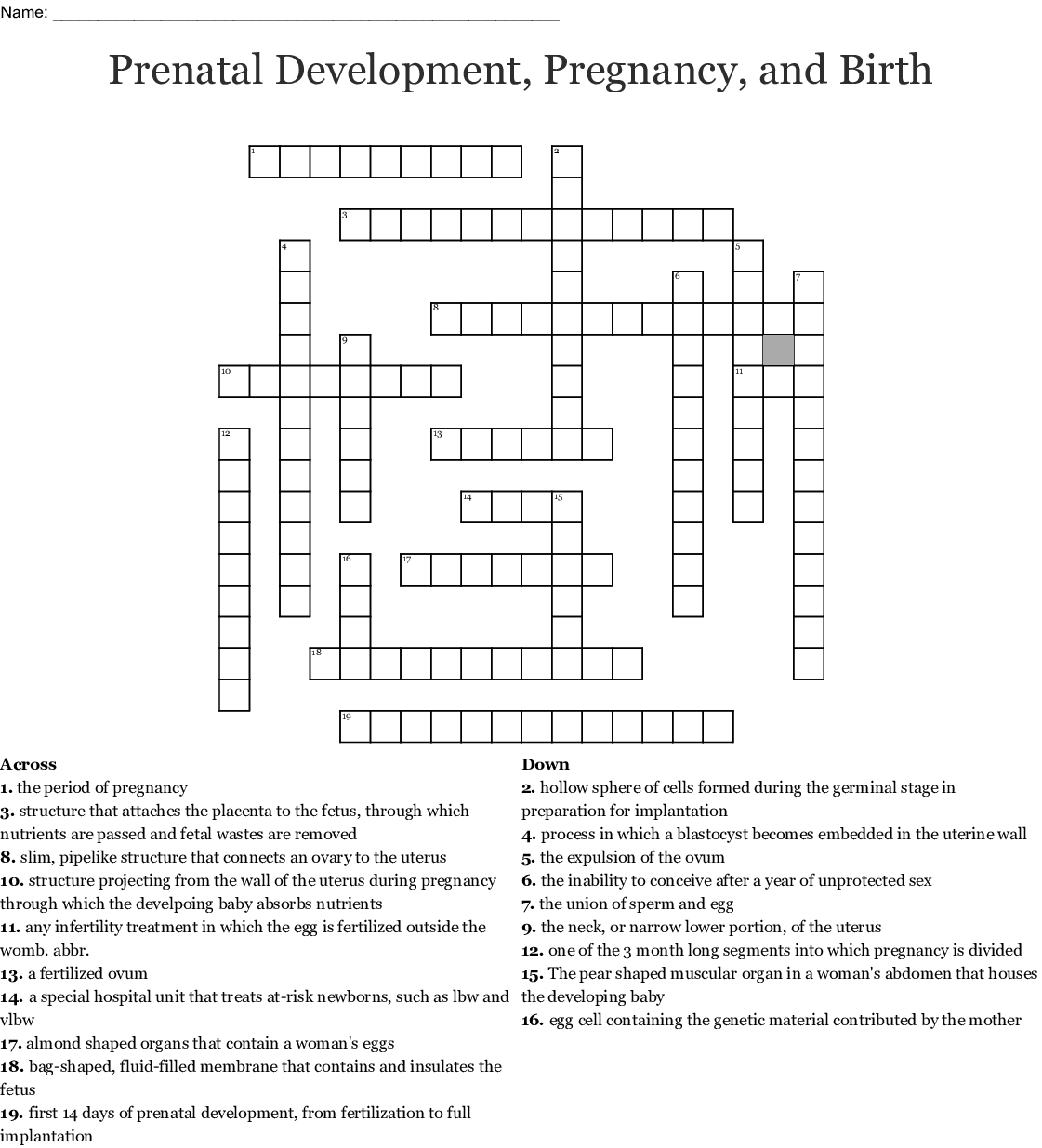 Stages Of Pregnancy Worksheet