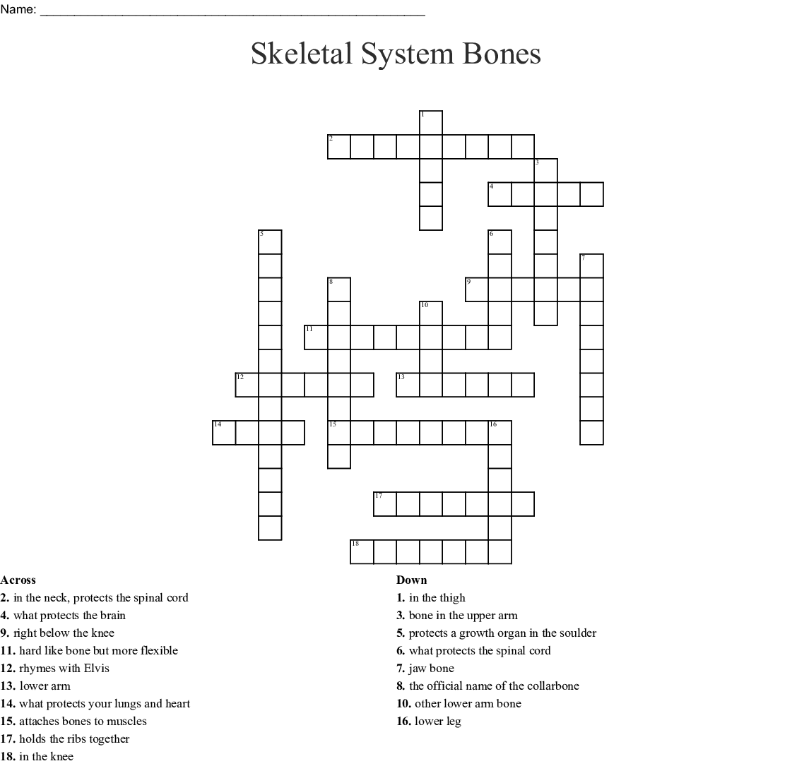 Bones Of The Body Crossword