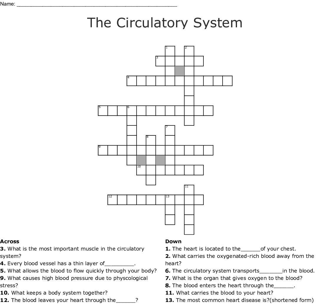 The Circulatory System Word Search