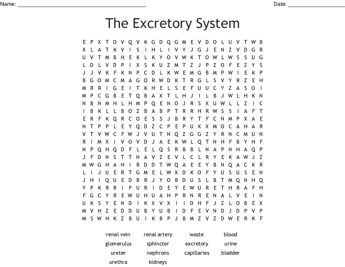 The Excretory System Word Search