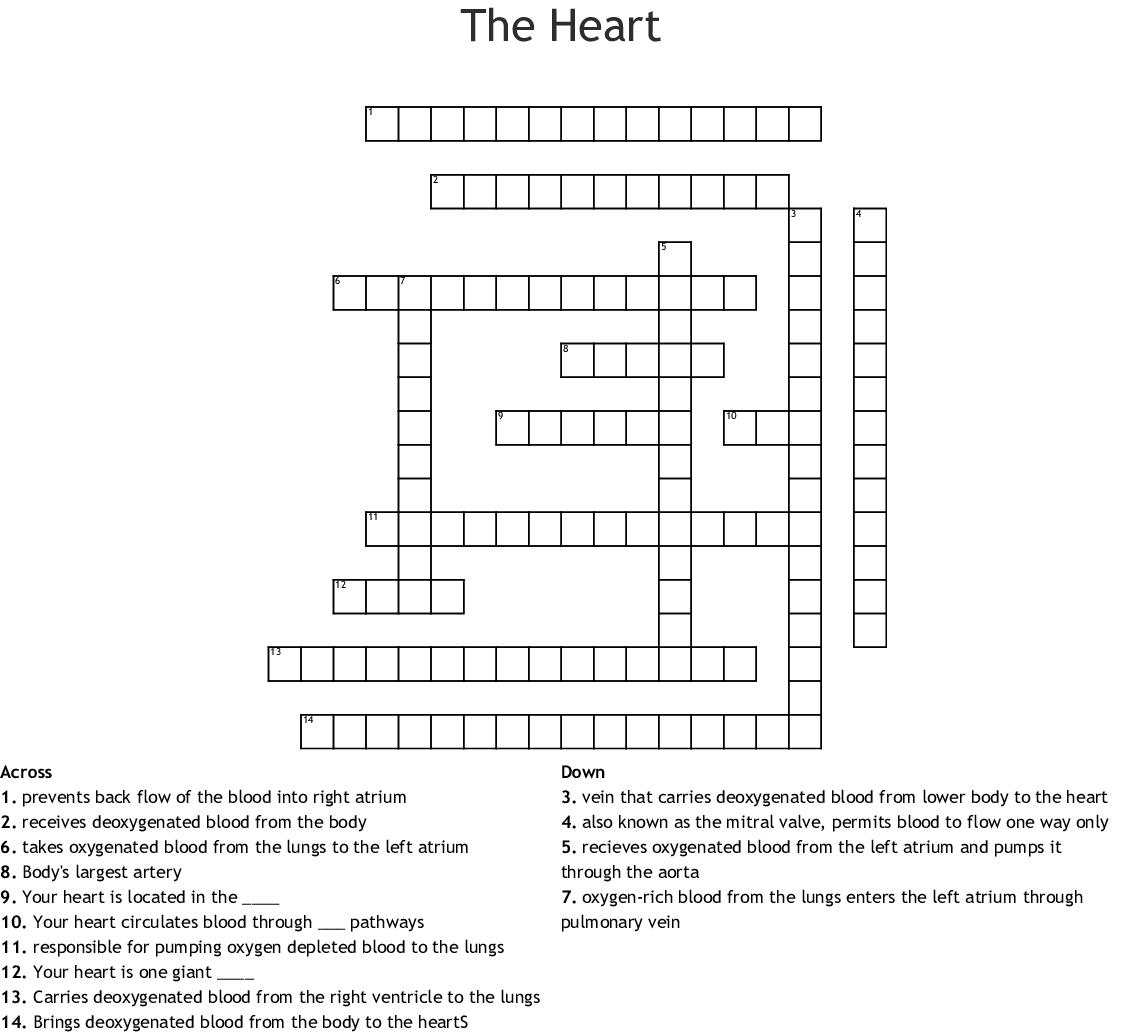 Body Framework Crossword