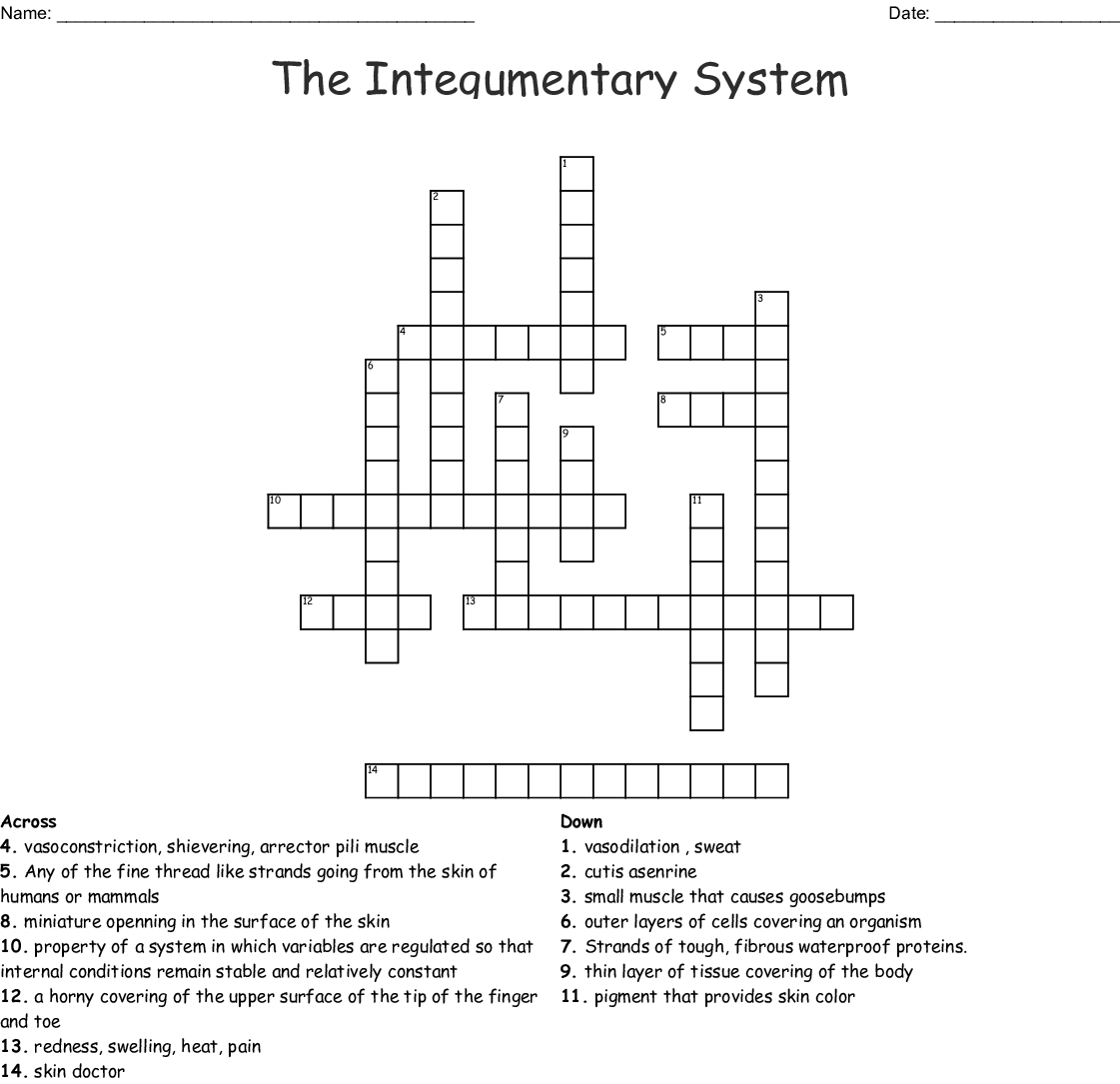The Integumentary System Crossword