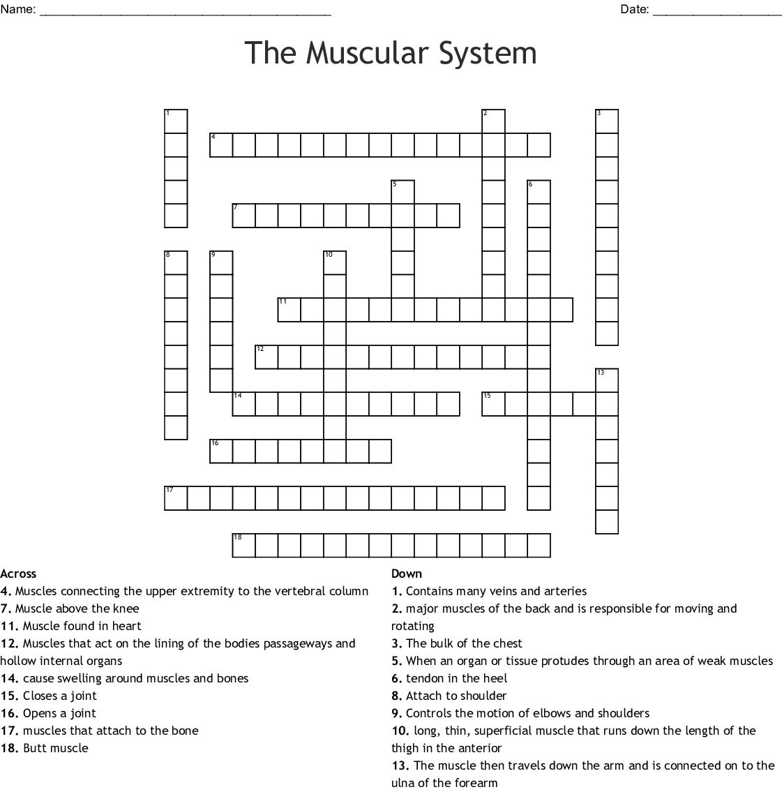 Skeletal Muscular System Crossword