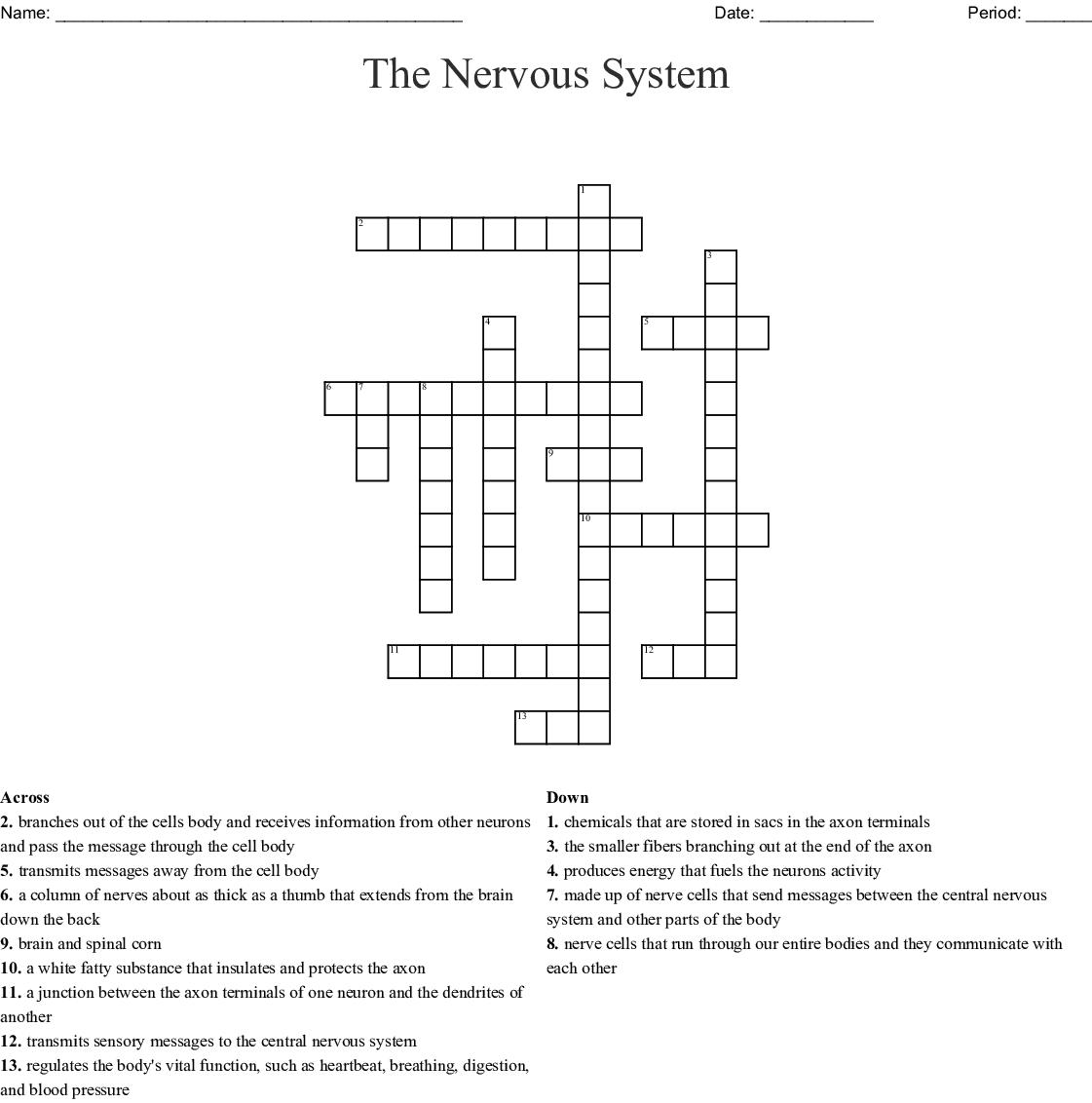 Anatomy The Nervous System Crossword
