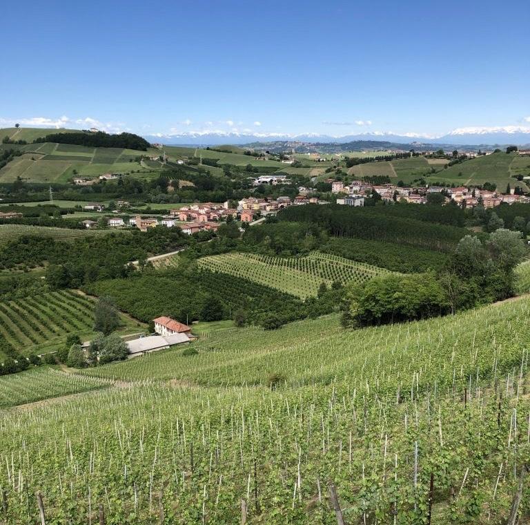 piedmont-viticulture