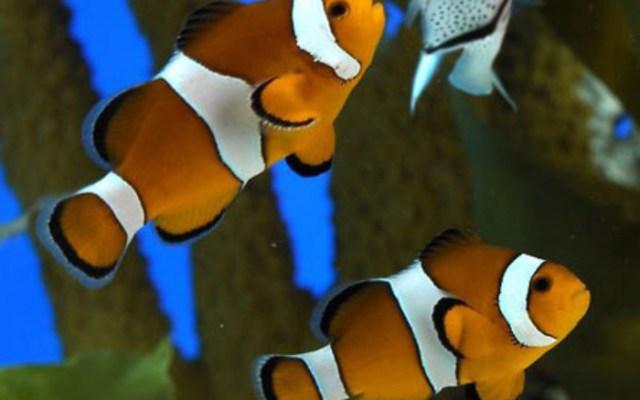 fish at the barcelona aquarium