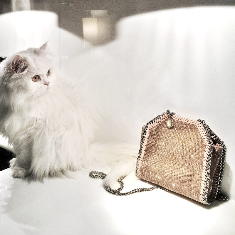 Kitty with Stella McCartney bag