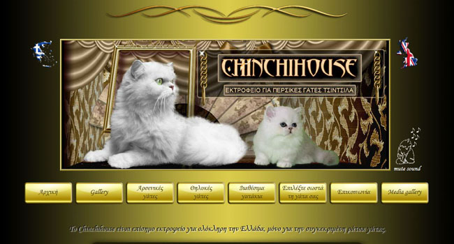 Chinchihouse - Persian chinchilla cattery