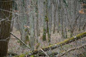 On est arrivés dans une grande forêt