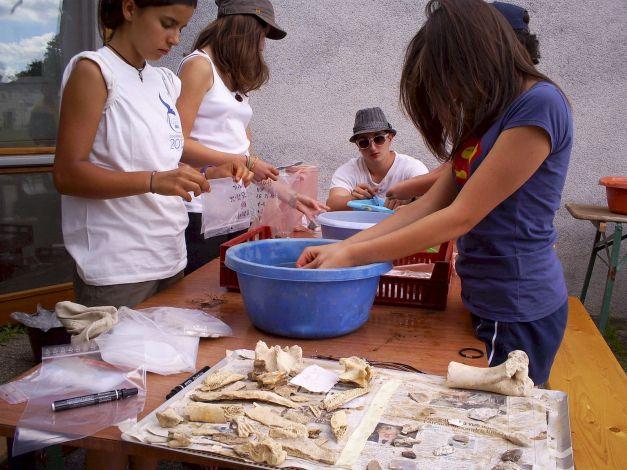 Découverte de l'étude des restes de faune