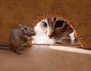 Le jeu du chat et la souris... jusqu'à quand ?