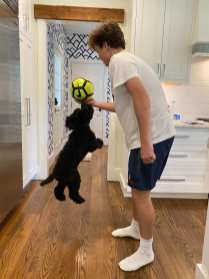 Instead of hanging out with his buddies, Chris Begier plays with his puppy, Rocky, in his kitchen on Friday, Sept. 25, 2020. Rocky keeps Begier company during the lonely times of virtual high school. (J24/Grayson Begier)