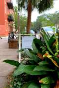 """A sign that reads """"Coffee + Food"""" is tucked behind lush foliage outside of Mirabelle Cafe in Savannah, Ga. on Tuesday. Sept. 29, 2020. Customers love to sit on the bench and enjoy the city scenery. (J24/Isabella Cammisa)"""
