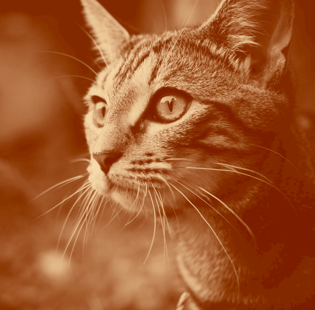Coloring Your Images With Duotone Filters