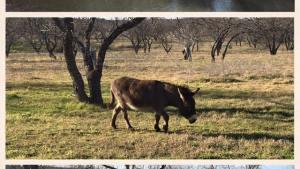 Tooele Utah horse property