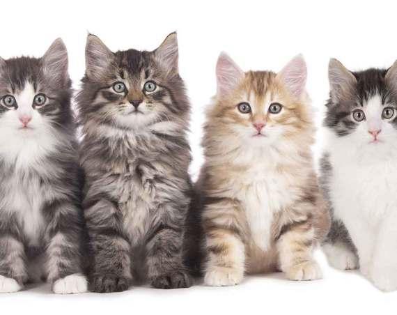 Aktuelle Katzen