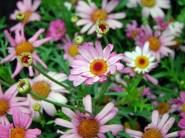 flowers-113503_1280 - kopia